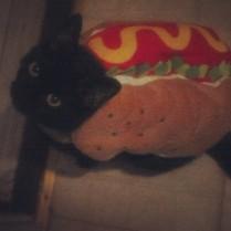 Anna the hotdog